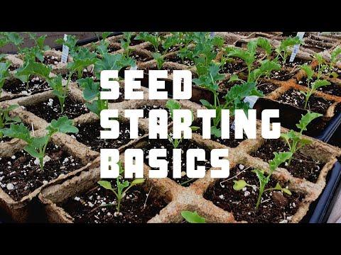 starting-a-garden:-seed-starting-basics