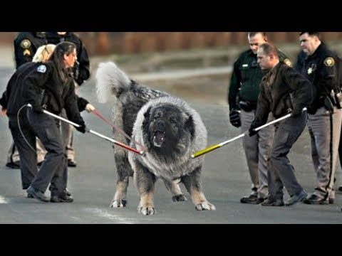 These 10 Dogs Are Most Dangerous