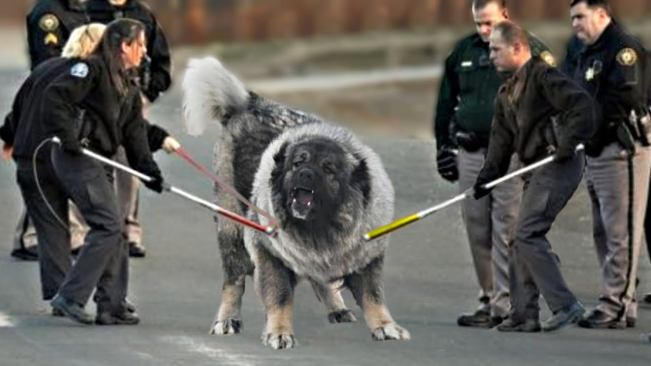 These 10 Dogs Are Most Dangerous You