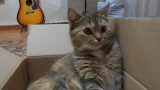 Кошка Ромашка икает!