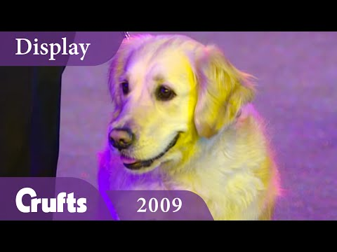 Southern Golden Retriever Display Team performs at Crufts 2009 | Crufts Dog Show