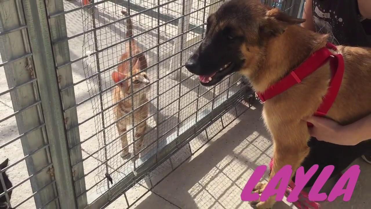 Layla con gatos protectora de animales m laga youtube for Protectora de animales malaga ciudad jardin
