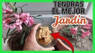 Mi VECINA aplica esto a su jardín y siempre está HERMOSO | Fertilizante Casero thumbnail