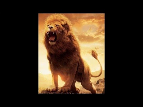 pictures lions