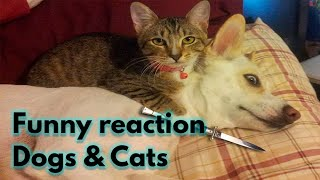 Funniest Dogs & cats  Best Of The 2021 Funny Animal Videos #1 | Animal's Kingdom