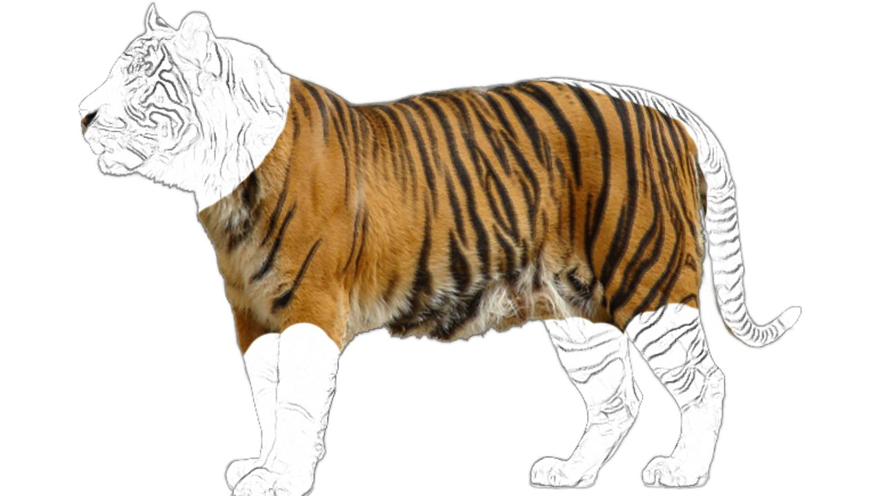 tiger sketch for kids and toddlers and animals drawing wild animal animation for children - Sketch For Kids
