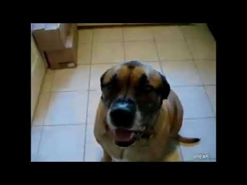Dog Eats Bean Burrito In 1 Second 10 Hours Youtube