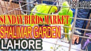 VISIT OF SUNDAY BIRDS MARKET LAHORE SHALIMAR GARDEN...