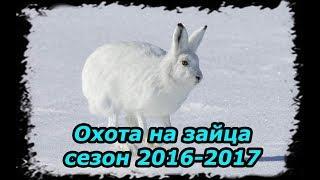Охота на зайца 2016 2017