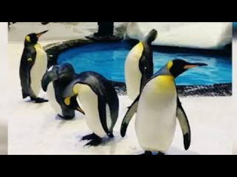 Snow penguins at SKI Dubai | One of the largest shopping mall in the world |