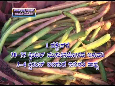 15 06 2017 food grain based cropping system for monsoon dr b k ramachandrappa