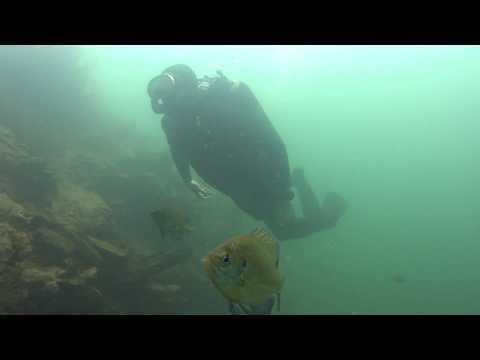 Pactola Reservoir Vintage Diving.