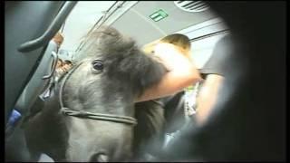 pony im bus