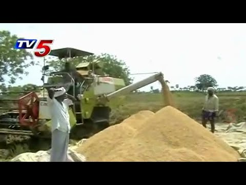 Central Govt policies against rice cultivation farmers | Annapoorna : TV5 News