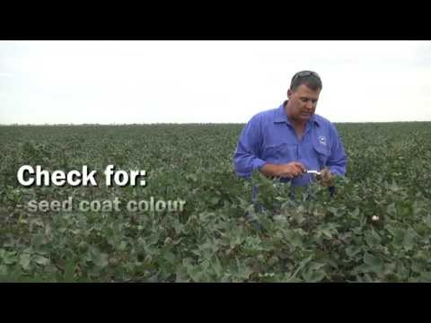 Making the decision to defoliate