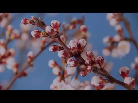 Spring Forward 2018