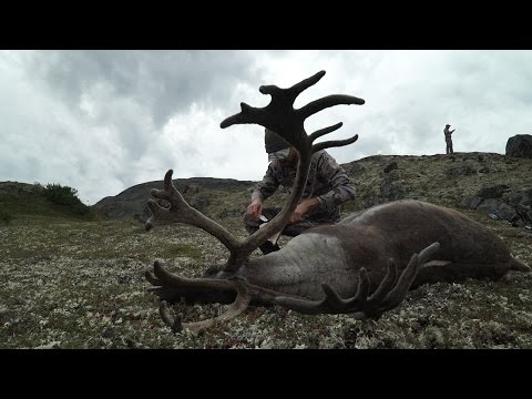 S:7 E:8 DIY Caribou In Alaska Father And Son Hunt With Remi Warren Of SOLO HNTR