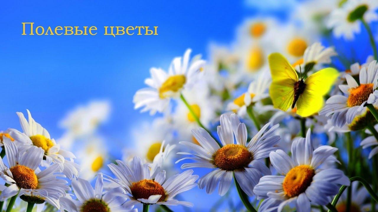 красивые фото полевых цветов