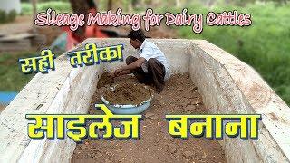 Sileage Making for Dairy Cattles   चारा प्रबंधन और साल भर उपलब्धता   Dairy Pashu Prabandhan