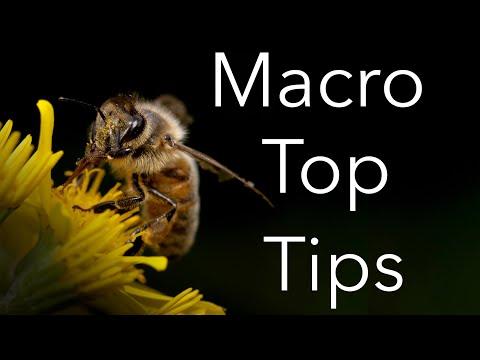 Macro Photography Tutorial: Equipment, Lighting And Settings