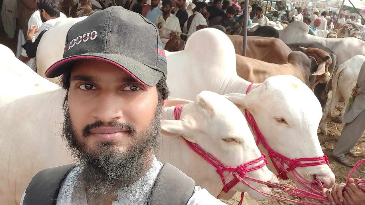 🔴 Live At Shaykh Wahin Cow Mandi 2020