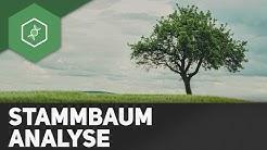 Stammbaumanalyse einfach erklärt ● Gehe auf SIMPLECLUB.DE/GO & werde #EinserSchüler