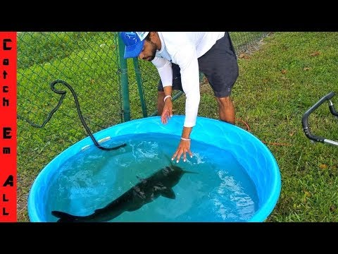 Giant CATFISH GROWING In Mini POOL POND!