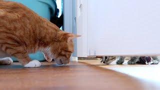 なんでこのドア閉まっているの?てか、そこにいるの誰?子猫たちのいるドアの向こうが気になるコール&マーマレード