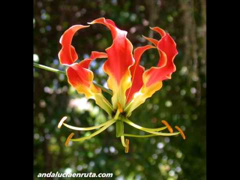 VIDEOS PLANTAS EXOTICAS 0001 Travel Video