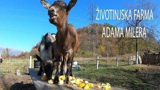 Životinjska farma Adama Milera