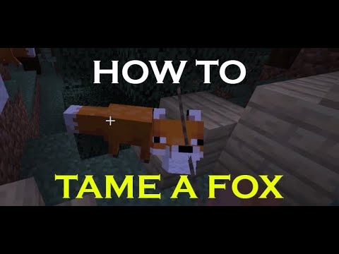 how-to-tame-a-fox-in-minecraft-2020