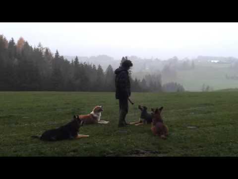 Hundeschule Allgau