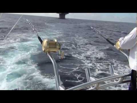 Birbeck Blackman Blue Marlin XXVI 2012