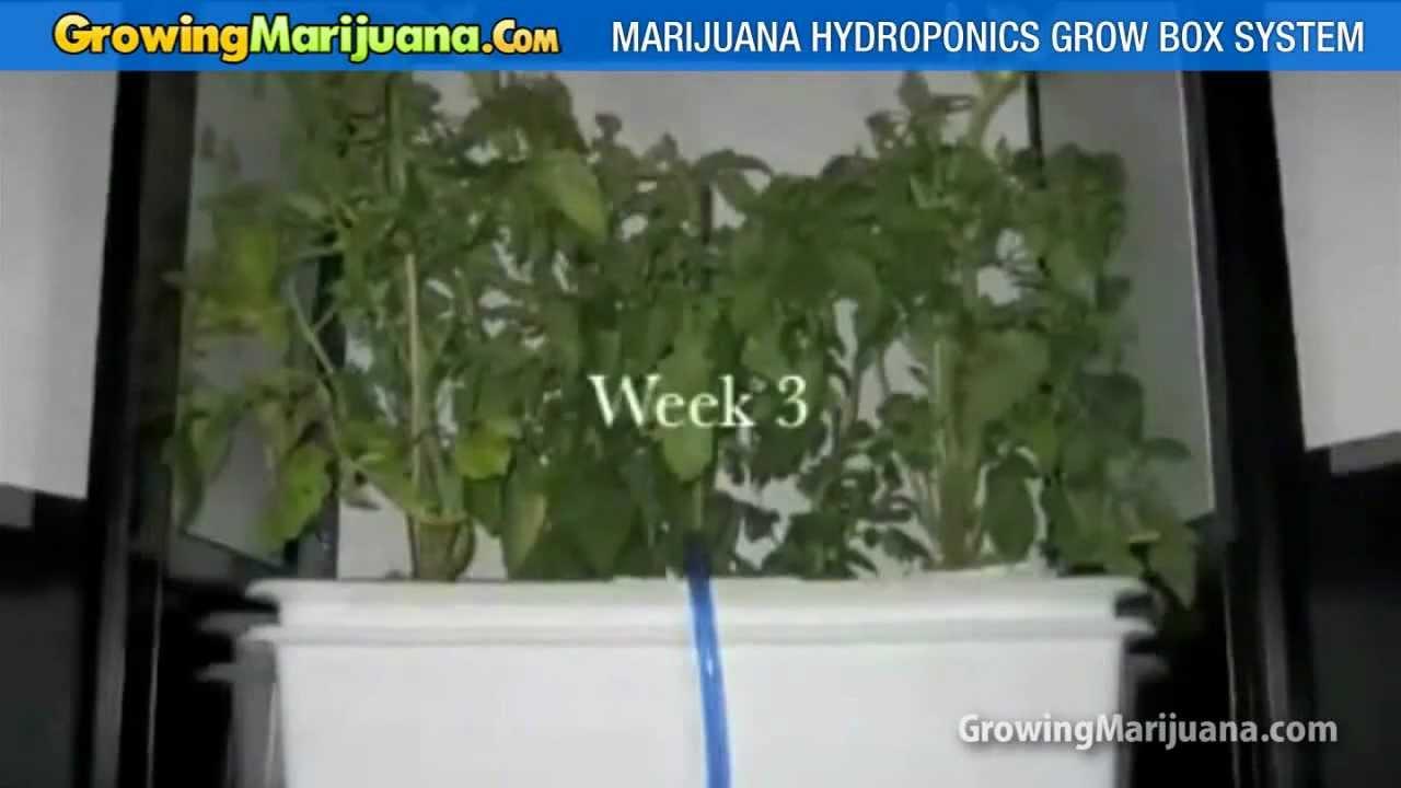 Superbe Marijuana Growbox For Hydro Weed Grow   Weed Growing Equipment   YouTube