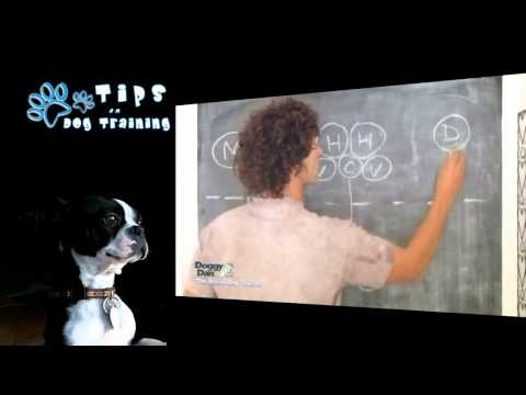 Dog Pack Leader | Puppy Training Chicago | Online Dog Trainer