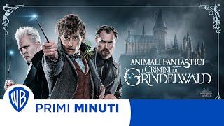 Animali Fantastici - I Crimini di Grindelwald - I Primi minuti!