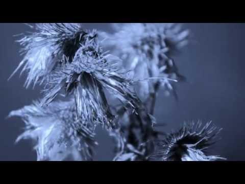 James Bay -  Clocks go Forward (Lyrics Video)