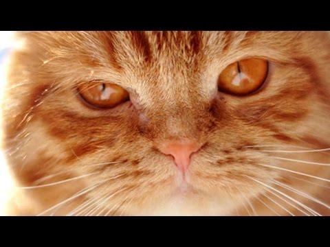 Фотографии рыжих кошек и котиков
