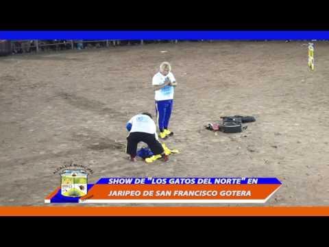 PRESENTACION DE LOS GATOS DEL NORTE EN LAS FIESTAS TAURINAS DE SAN FRANCISCO GOTERA