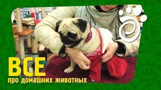 Одежда Для Собак (Часть Вторая). Все О Домашних Животных