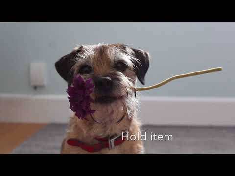 Bramble border terrier acting showreel