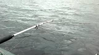 видео Отдых на озере Волго. Базы и дома отдыха, коттеджи, домики в частном секторе на озере Волго