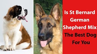 Is St Bernard German Shepherd Mix the Best Dog For You