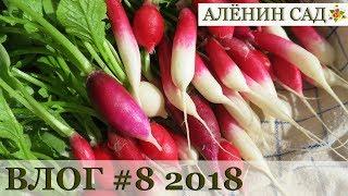 Влог #8 Сакура / Мизуна / Редис / Нарциссы / Примулы / Тюльпаны