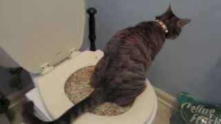 Cats use TOILET??