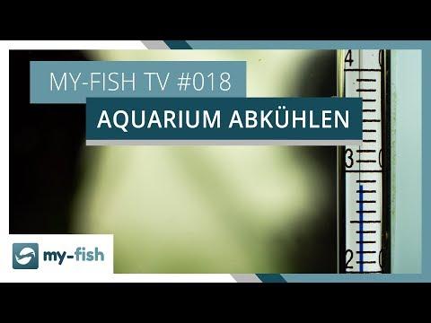 Aquarium im Sommer abkühlen | my-fish TV