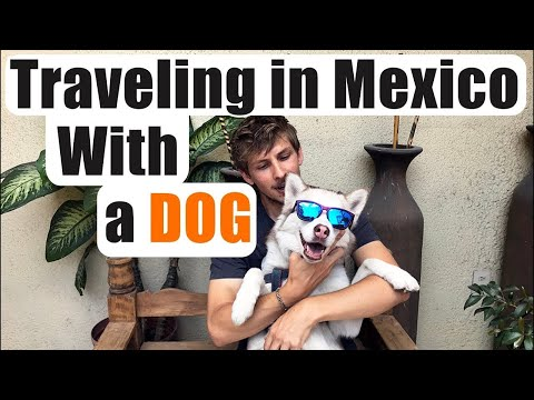 #95. Traveling in Mexico With a Dog