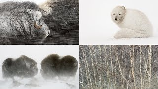 THE STORY BEHIND 4 NATURE PHOTOS | Winter wildlife photography + Expedition Ellesmere update