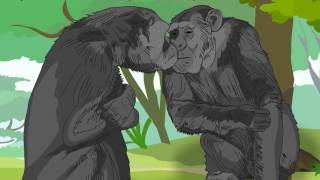 Kiko & Tommy: Can chimps be considered as humans?