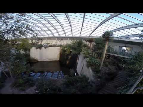 The National Botanic Garden of Wales'Flying Jacks'My Harris Hawk 'Hidden Carmarthenshire